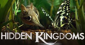 Hidden Kingdoms - Im Reich der kleinen Tiere