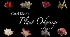 Prachtvolle Pflanzenwelt