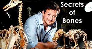 Das Geheimnis der Knochen