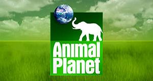 Jane Goodall - Hoffnung für die Menschenaffen