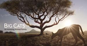 Raubkatzen - Eine faszinierende Tierfamilie