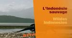 Wildes Indonesien
