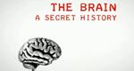 Grausam oder heilsam: Experimente am Gehirn