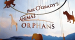 Paul O'Grady's Animal Orphans – Bild: itv/Screenshot