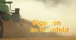 Giganten im Kornfeld – Bild: HR