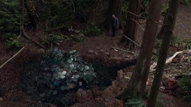 Unsicheres Gefahrengut im Wald.