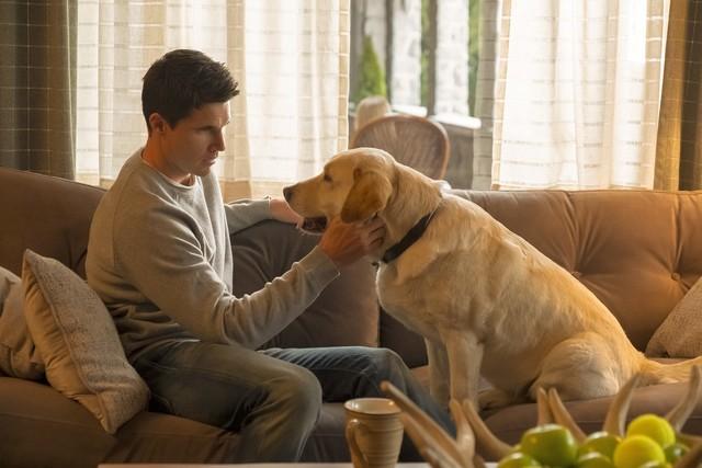 """Nathan (Robbie Amell) und sein """"Therapiehund"""" äh Therapeut."""